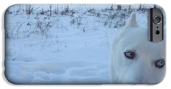 Dog In Landscape Photographs iPhone Cases - Snow Dog iPhone Case by Paddy Shaffer