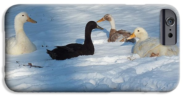 Indian Runner Duck iPhone Cases - Snow Ducks iPhone Case by Kimmary I MacLean