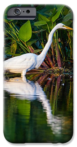 Recently Sold -  - Birds iPhone Cases - Snow Egret and Its Reflection iPhone Case by Andres Leon