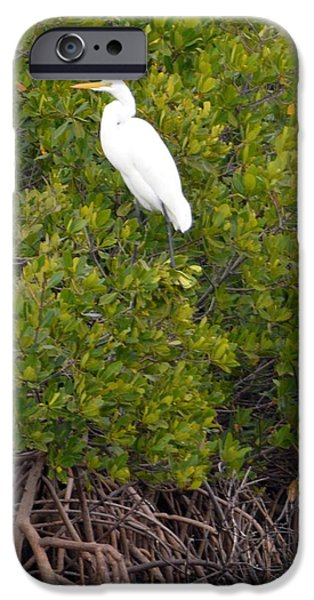Mounds iPhone Cases - Snow Egret Poised iPhone Case by Lena Hatch