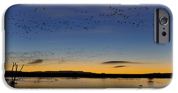 Nature Scene iPhone Cases - Snow Geese And Marsh Pond At Sunrise iPhone Case by John Shaw