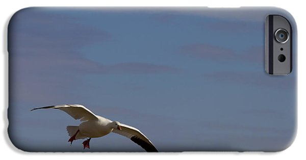 Snow iPhone Cases - Snow Goose Approach iPhone Case by Mike Dawson