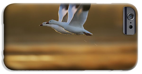 Recently Sold -  - Animals Photographs iPhone Cases - Snow Goose Pair Flying iPhone Case by Konrad Wothe