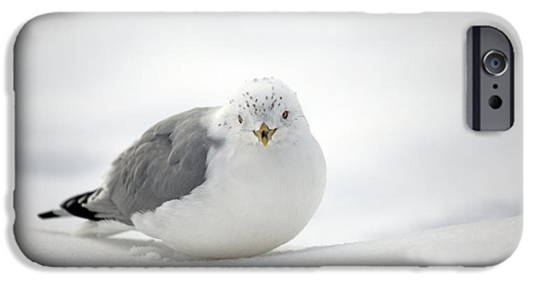 Winter Storm iPhone Cases - Snow Gull iPhone Case by Karol  Livote