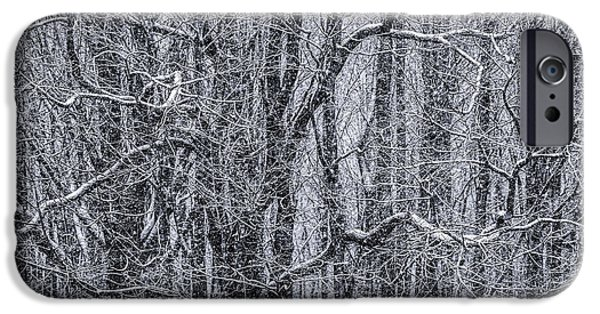 Snow iPhone Cases - Snow in the Forest iPhone Case by Diane Diederich