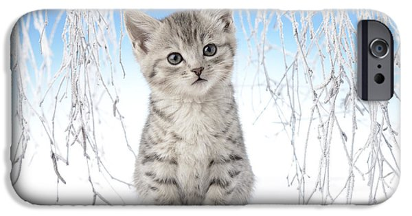 Christmas Eve iPhone Cases - Snow Kitten iPhone Case by Greg Cuddiford