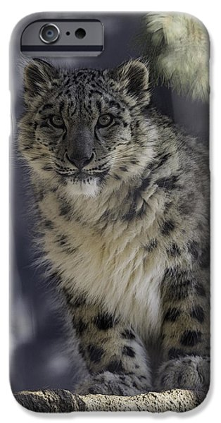 Snow iPhone Cases - Snow Leopard 1 iPhone Case by Everet Regal