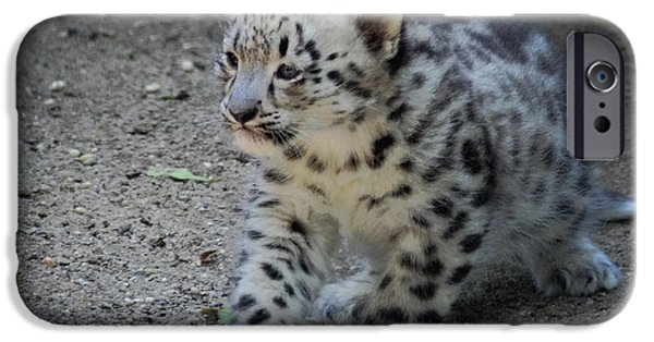 Little iPhone Cases - Snow Leopard Cub iPhone Case by Terry DeLuco