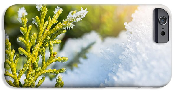 Morning iPhone Cases - Snow melts on coniferous tree in winter iPhone Case by Gregory DUBUS