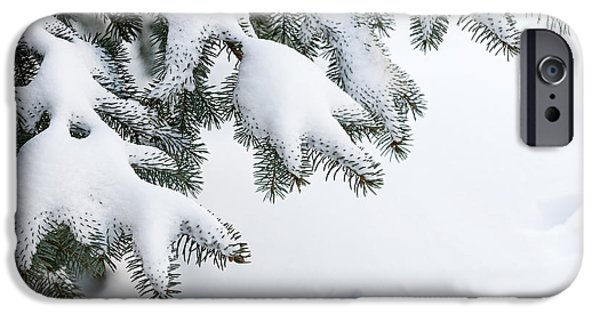 Snow iPhone Cases - Snow on winter branches iPhone Case by Elena Elisseeva