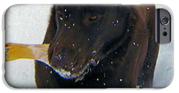 Chocolate Lab iPhone Cases - Snow Plow iPhone Case by Mayhem Mediums