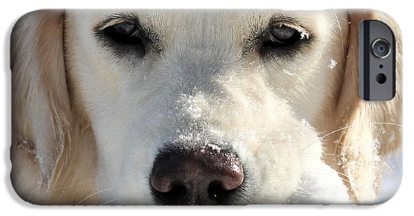 Golden Retriever Snowball iPhone Cases - Snow Puppy iPhone Case by Christy Edwards