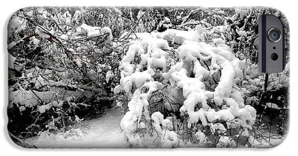 Snow Scene iPhone Cases - Snow Scene 1 iPhone Case by Patrick J Murphy