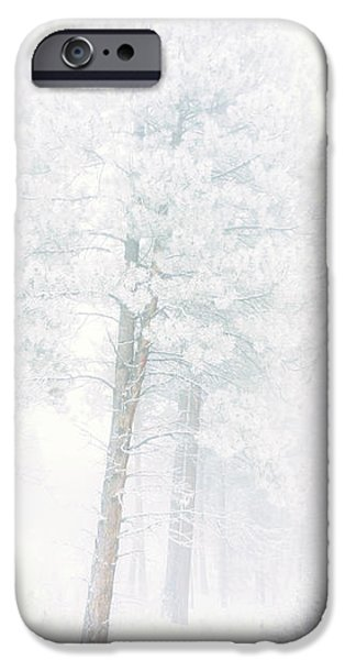Snowed In iPhone Case by Tara Turner