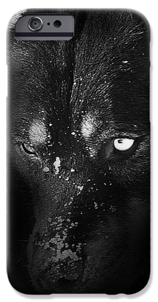 Dogs iPhone Cases - Snowface iPhone Case by Jeff Klingler