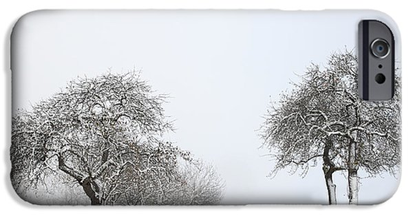Wintertime iPhone Cases - Snowy Apple Trees iPhone Case by Jana Behr