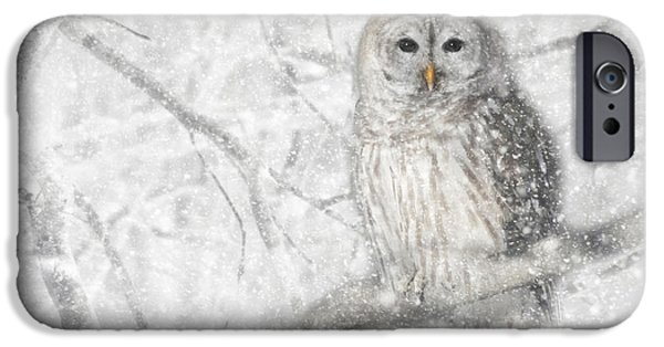 Wintry Digital iPhone Cases - Snowy Barred Owl iPhone Case by Lori Deiter