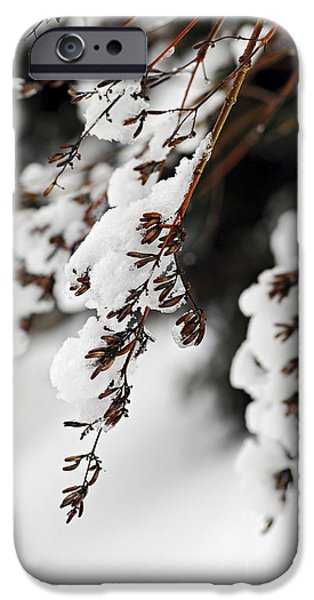 Winter iPhone Cases - Snowy branches iPhone Case by Elena Elisseeva