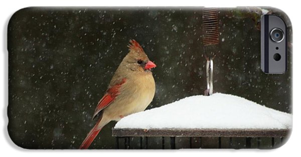 Snow Scene iPhone Cases - Snowy Cardinal iPhone Case by Benanne Stiens