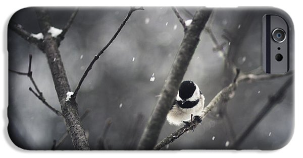 Snowy iPhone Cases - Snowy Chickadee iPhone Case by Shane Holsclaw
