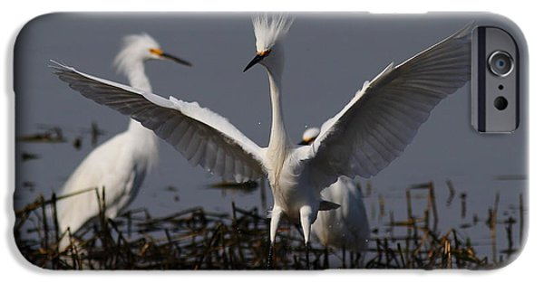 Snowy Day iPhone Cases - Snowy Egret . There Is Still Hope My Eagle Stance Will Distract Them From My Bad Hair Day . 7D12046 iPhone Case by Wingsdomain Art and Photography