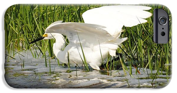 Snowy Pyrography iPhone Cases - Snowy Egret at Fort Fisher iPhone Case by Gordon  Allen