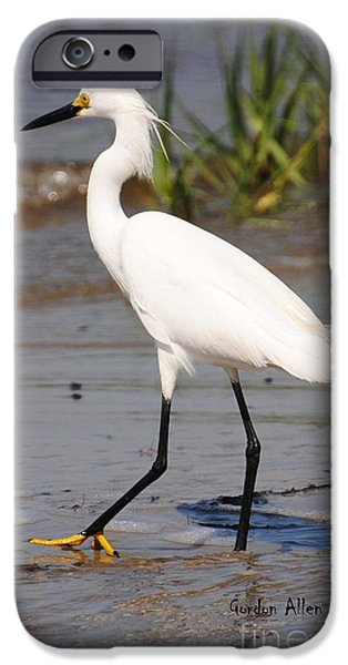 Snowy Pyrography iPhone Cases - Snowy Egret at Kure Beach iPhone Case by Gordon  Allen