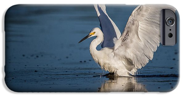 Wetlands iPhone Cases - Snowy Egret Frolicking in the Water iPhone Case by Andres Leon