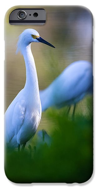Travel iPhone Cases - Snowy Egret on a lush green foreground iPhone Case by Andres Leon