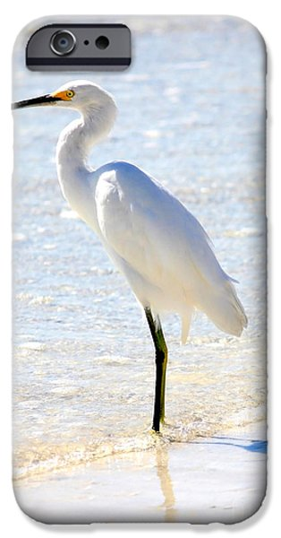 Snowy Egret iPhone Cases - Snowy Egret on the beach iPhone Case by Carol Groenen