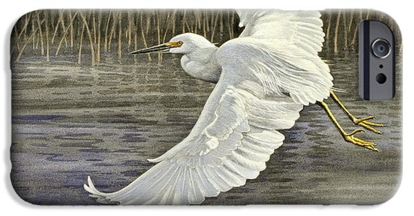 Everglades iPhone Cases - Snowy Egret iPhone Case by Paul Krapf