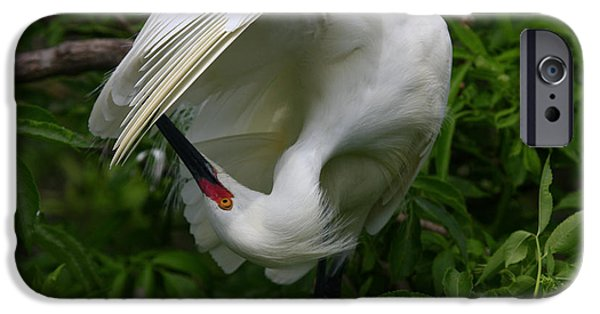 Snowy iPhone Cases - Snowy Egret Preening iPhone Case by John Tsumas