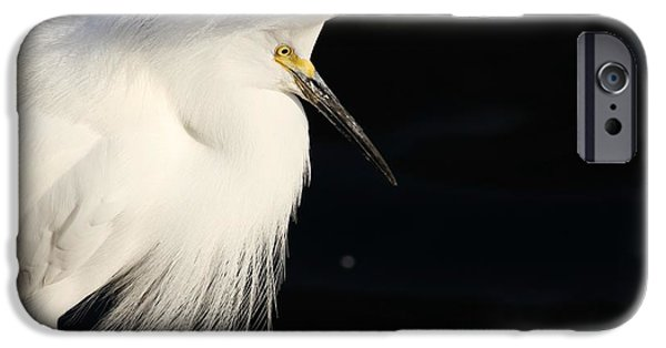 Florida Pyrography iPhone Cases - Snowy Egret iPhone Case by Valia Bradshaw
