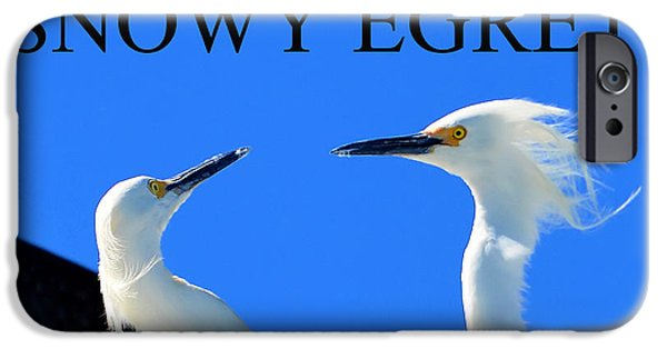 Snowy Egret iPhone Cases - Snowy Egrets iPhone Case by David Lee Thompson