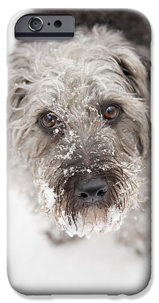 Pups Digital Art iPhone Cases - Snowy Faced Pup iPhone Case by Natalie Kinnear