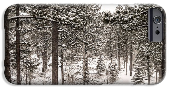 Snowy Day iPhone Cases - Snowy Forest iPhone Case by Maria Coulson