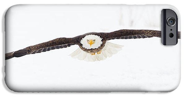 Flight iPhone Cases - Snowy Glide iPhone Case by John Blumenkamp