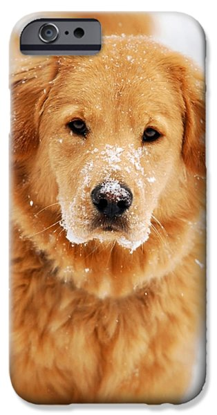 Fuzzy Golden Puppy iPhone Cases - Snowy Golden Retriever iPhone Case by Christina Rollo