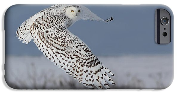 Mystic Art iPhone Cases - Snowy in action iPhone Case by Mircea Costina Photography