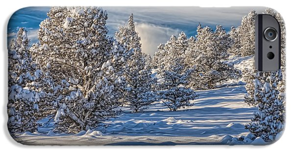 Wintertime iPhone Cases - Snowy Juniper Forest  iPhone Case by Leah McDaniel