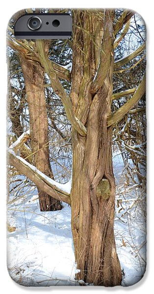 Oxford. Oxford Ma. Massachusetts iPhone Cases - Snowy Knotted Trees iPhone Case by Toby McGuire