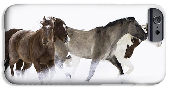 Horse iPhone Cases - Snowy March II iPhone Case by Carol Walker