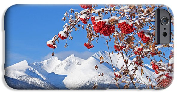 Berry iPhone Cases - Snowy Mountain Ash iPhone Case by Stanza Widen
