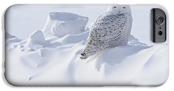 Snowbank iPhone Cases - Snowy on a Snowbank iPhone Case by Larry Ricker