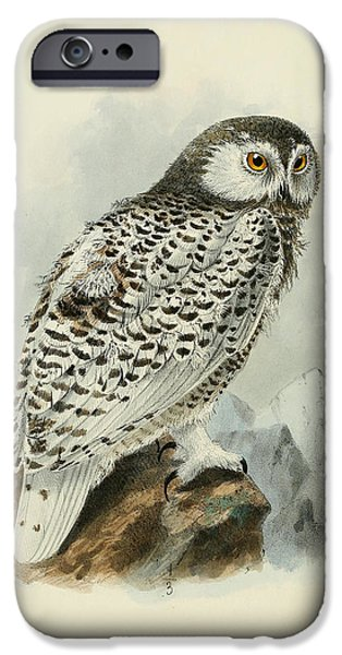 Snowy Paintings iPhone Cases - Snowy Owl 1 iPhone Case by J G Keulemans