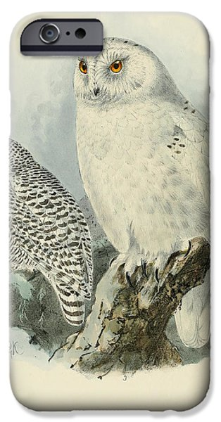 Snowy Paintings iPhone Cases - Snowy Owl 2 iPhone Case by J G Keulemans