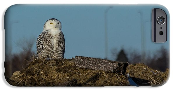 Snowy Photographs iPhone Cases - Snowy Owl iPhone Case by Aaron J Groen