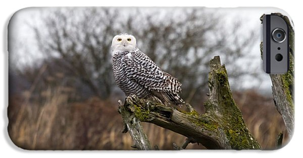 Snowy iPhone Cases - Snowy Owl at Boundary bay  iPhone Case by Pierre Leclerc Photography