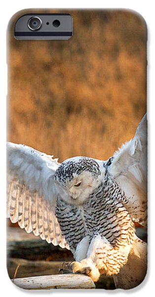 Snowy Owl - Bubo scandiacus iPhone Case by Michael Russell