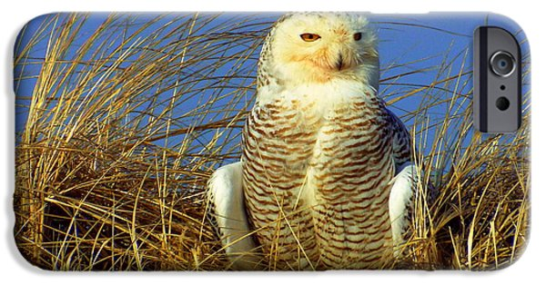 Mashpee iPhone Cases - Snowy Owl  iPhone Case by CapeScapes Fine Art Photography